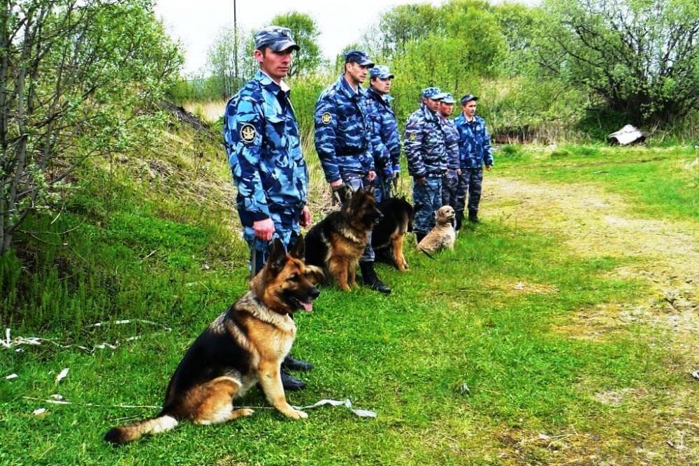 служебные собаки породы фото
